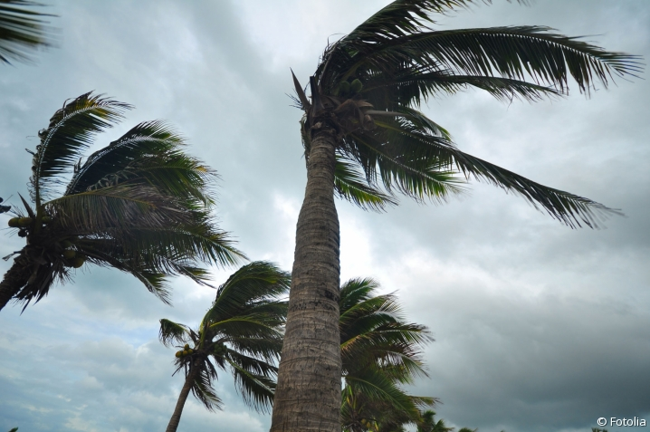 Ouragan Irma Artisans