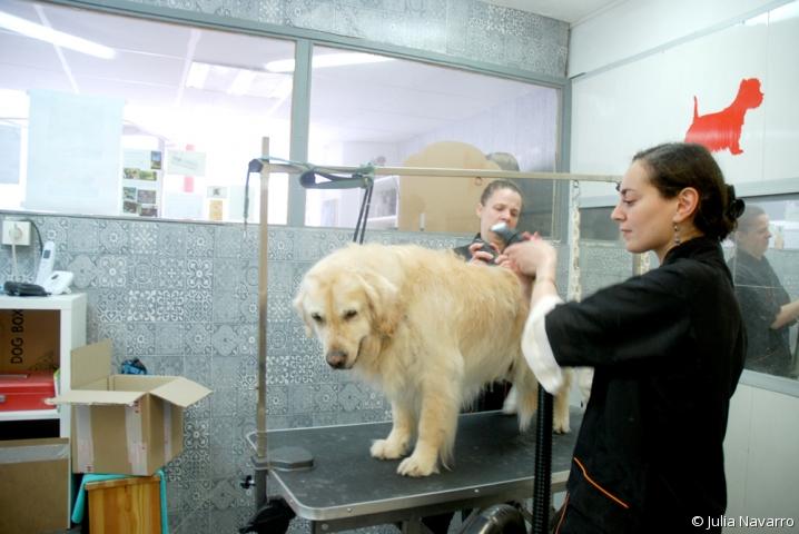 Séchage du chien Athos au sèche-cheveux pour animaux