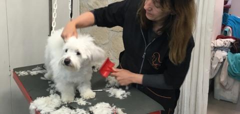 Fabienne Baraton, gérante de Royal's Dog