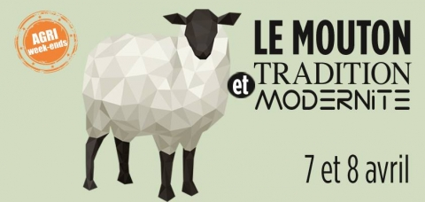Mouton tradition Rambouillet